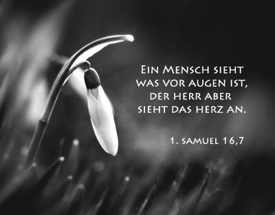 schöne sprüche aus der bibel Bibelverse   Zitate   Begleittexte   Trauer schöne sprüche aus der bibel